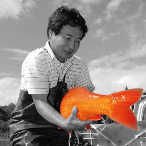 Ikeage bei Züchter Otsuka