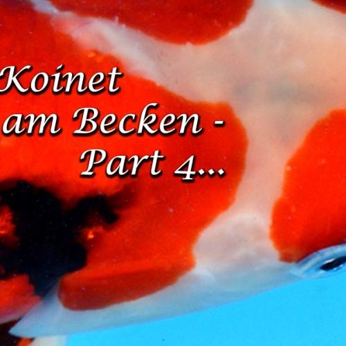 Bei Koinet am Becken Part 4