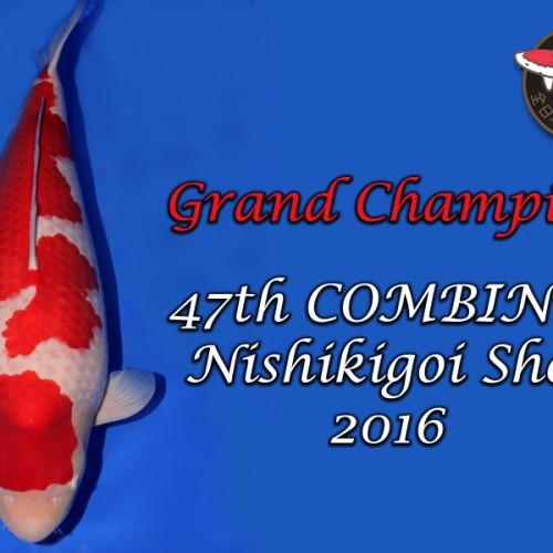 Grand Champion 2016