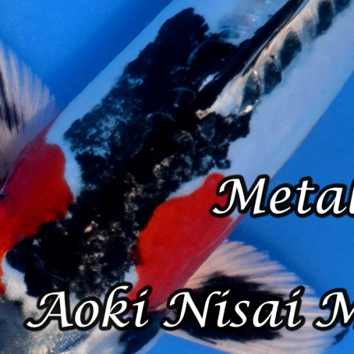 Aoki Nisai Mix