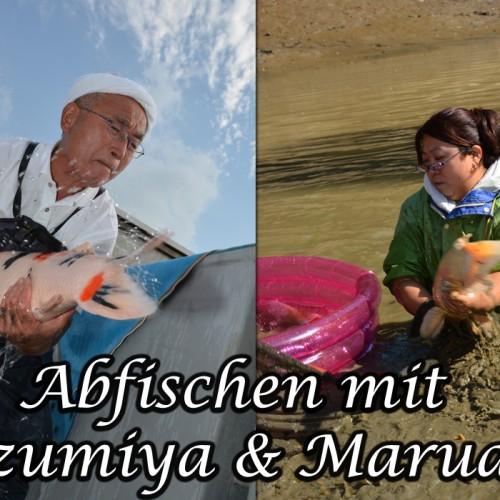 Abfischen mit Izumiya und Marudo