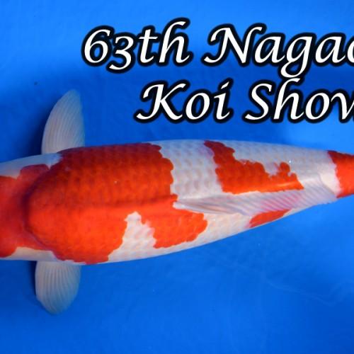 63th Nagaoka Koi Show