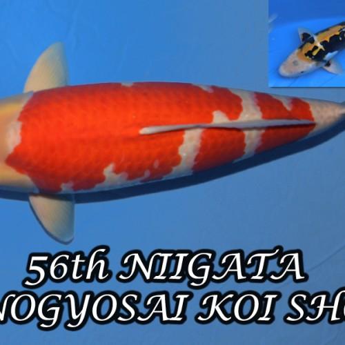The 56th Niigata Nogyosai