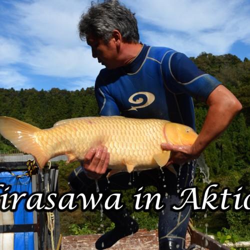 Hirasawa in Aktion!