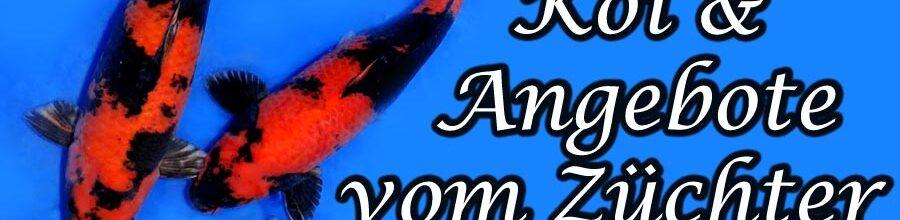 Shinoda – Azukari Koi & Angebote…