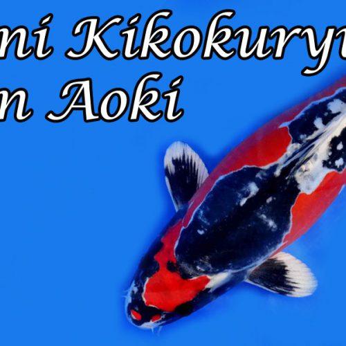 Beni Kikokuryu von Aoki