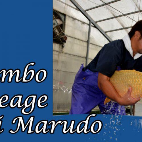 Jumbo Ikeage bei Marudo