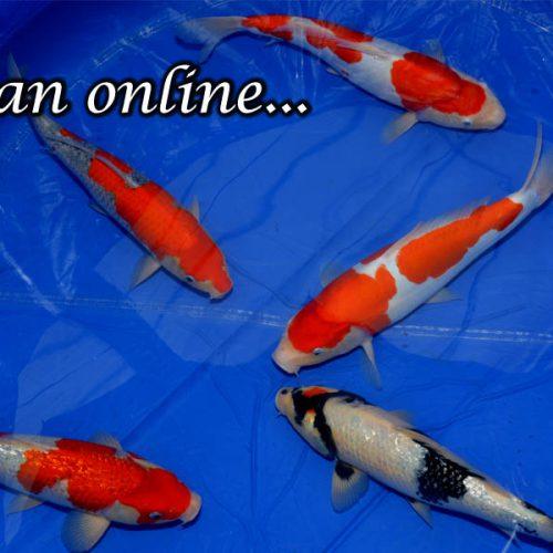 Japan online…