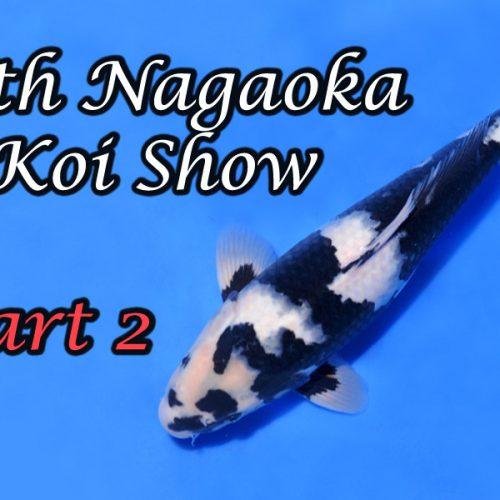 64th Nagaoka Koi Show Part 2