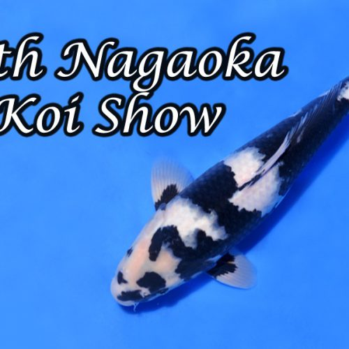 64th Nagaoka Koi-Show