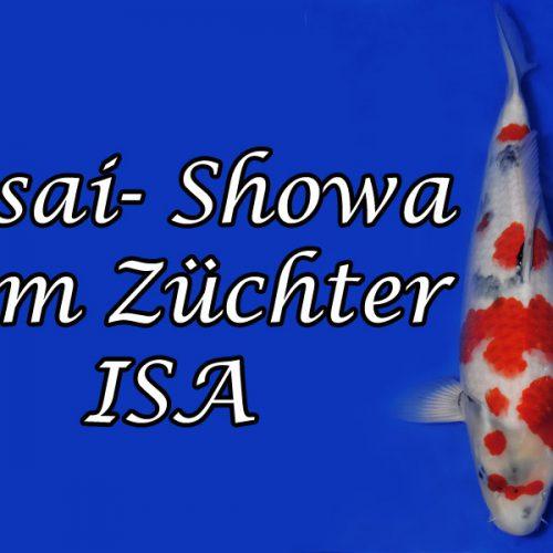 Nisai Showa vom Züchter – Isa