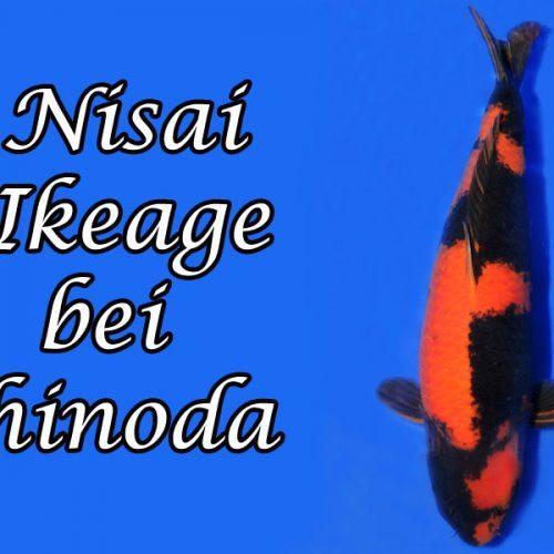 Nisai Ikeage bei Shinoda