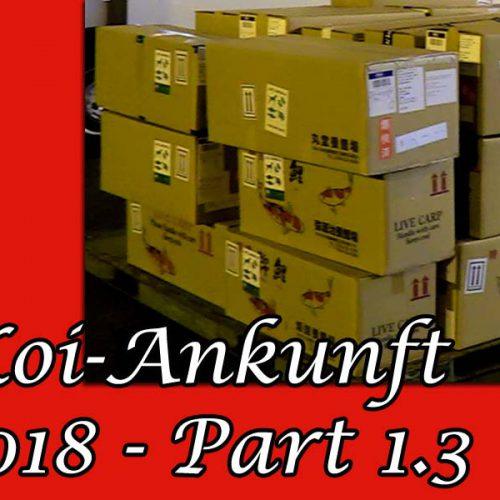 Koi-Ankunft 2018 Part 1.3