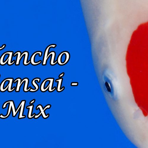 Tancho Sansai-Mix