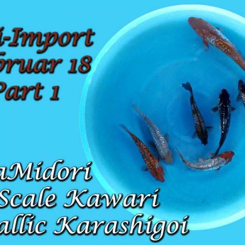 Koi-Import Februar 2018 Part1