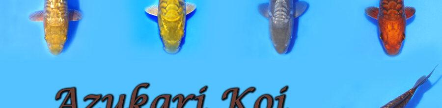 Azukari Koi