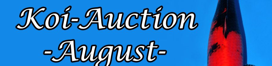 Koi-Auction August