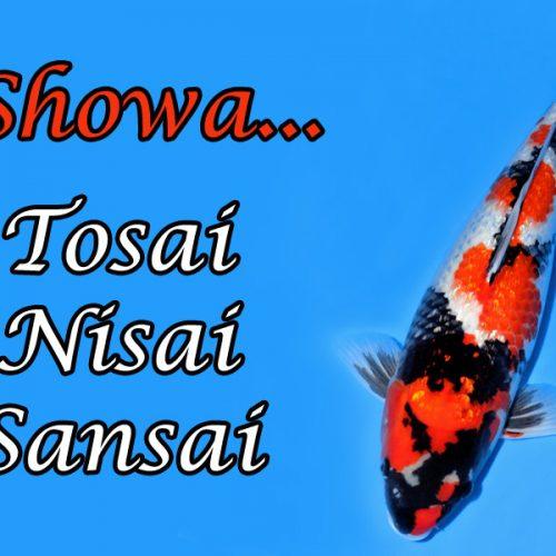 Showa – Tosai…Nisai…Sansai