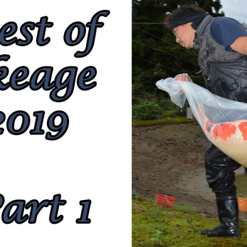 Best of Ikeage 2019 – Part 1