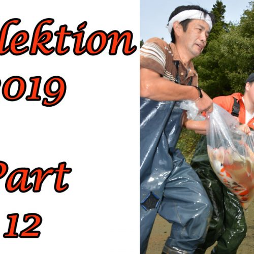 Japan-Koi-Selektion 2019 – Part 12