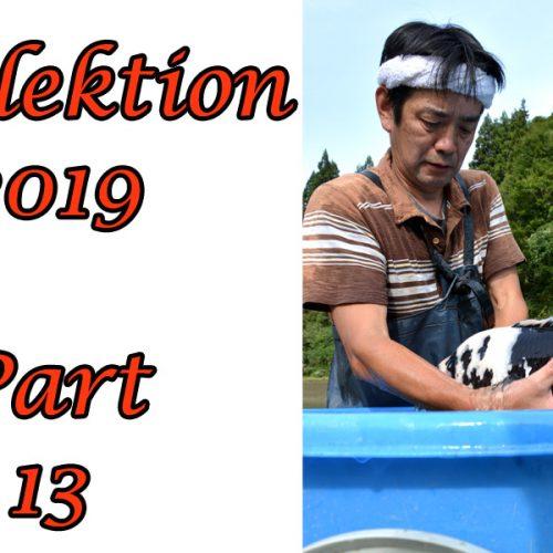 Koi-Japan-Selektion 2019 – Part 13