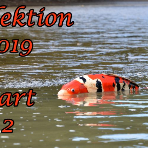 Japan-Koi-Selektion 2019 – Part 2