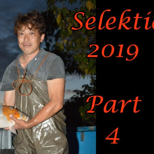 Japan-Koi-Selektion 2019 – Part 4