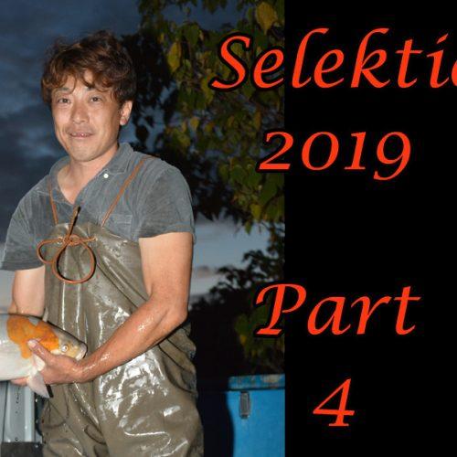 Japan-Koi-Selektion 2019 – Part 4