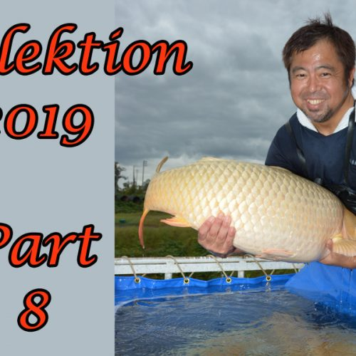 Japan-Koi-Selektion 2019 – Part 8