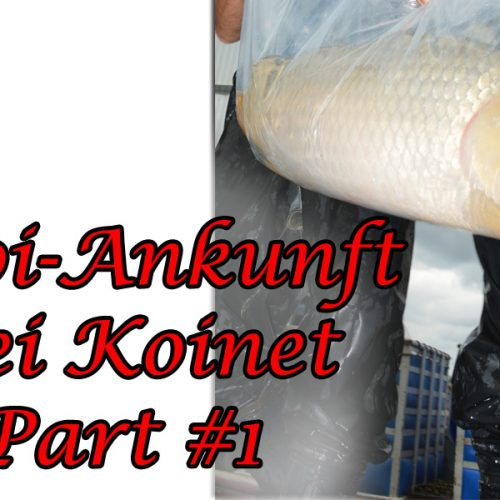 Koi-Ankunft Part #1
