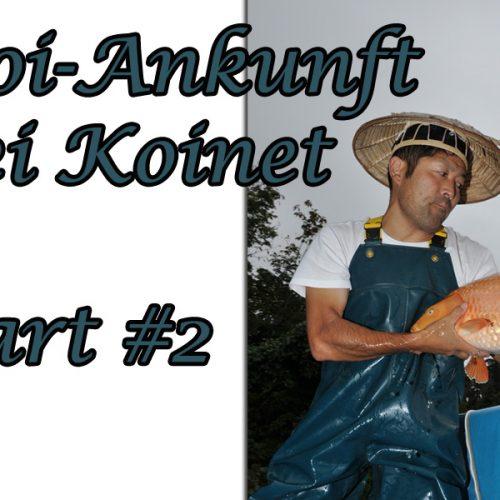Koi-Ankunft Part #2
