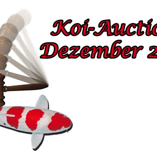 Christmas Special Koi Auction