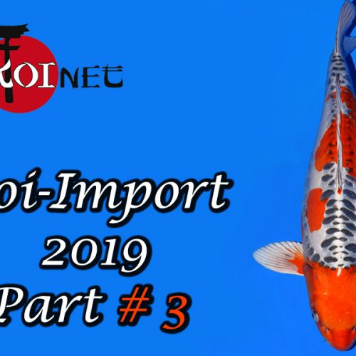 Koi-Import 2019 Part # 3
