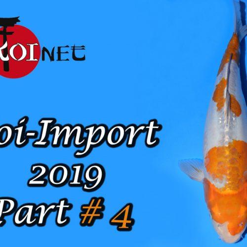 Koi-Import 2019 Part #4