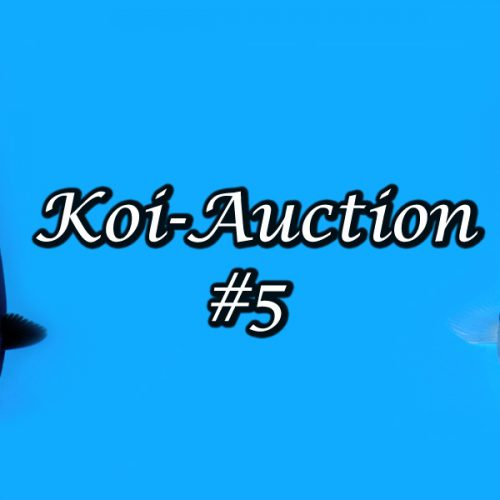 Koi-Auction #5 / Isa Showa….