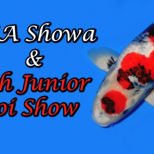 Isa Showa & 7th Junior Koi Show