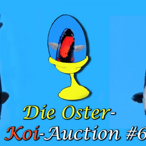 Oster-Koi-Auction #6 / 22 Koi im Video…