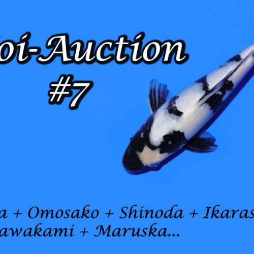 Koi-Auction #7