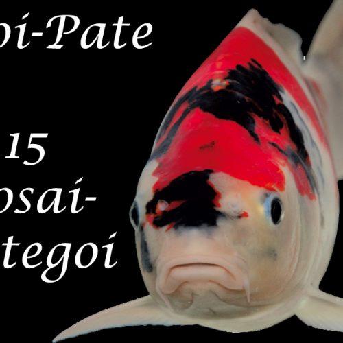 Koi-Pate