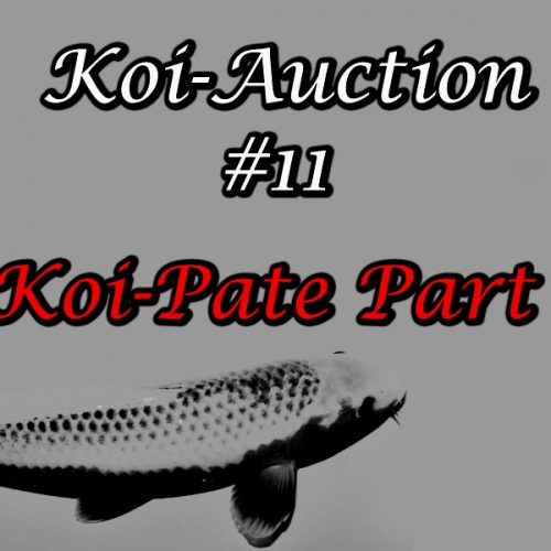 Koi-Auction #11 / Koi-Pate Part 1