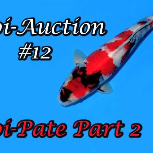 Koi-Auction #12 / Koi-Pate Part 2