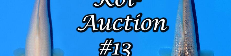 Koi-Auction #13