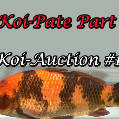 Koi-Auction #14 / Koi-Pate Part 3
