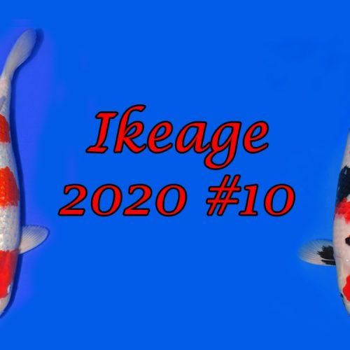 Ikeage 2020 #10