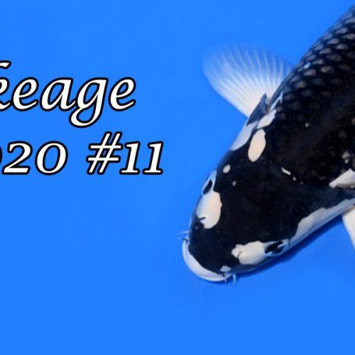Ikeage 2020 #11