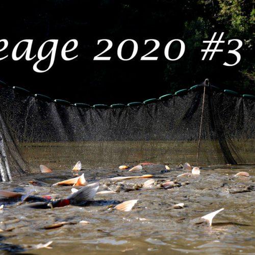 Ikeage 2020 #3