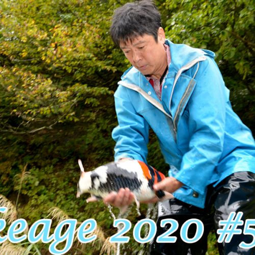 Ikeage 2020 #5