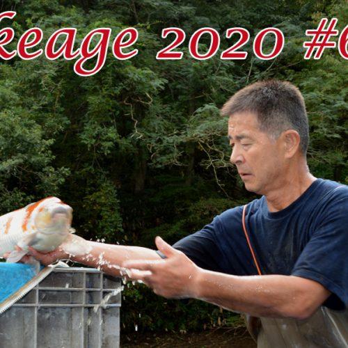 Ikeage 2020 #6