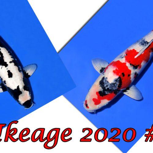 Ikeage 2020 #7