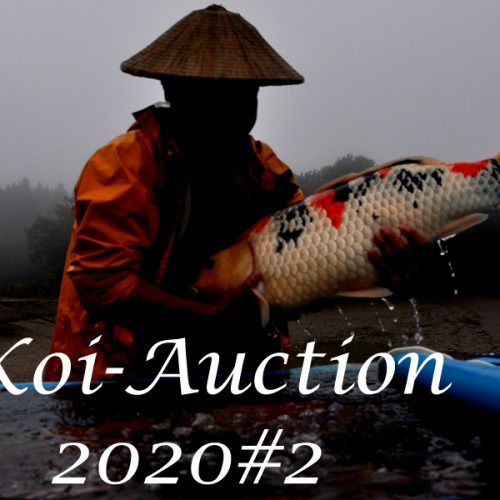 Koi-Auction 2020#2